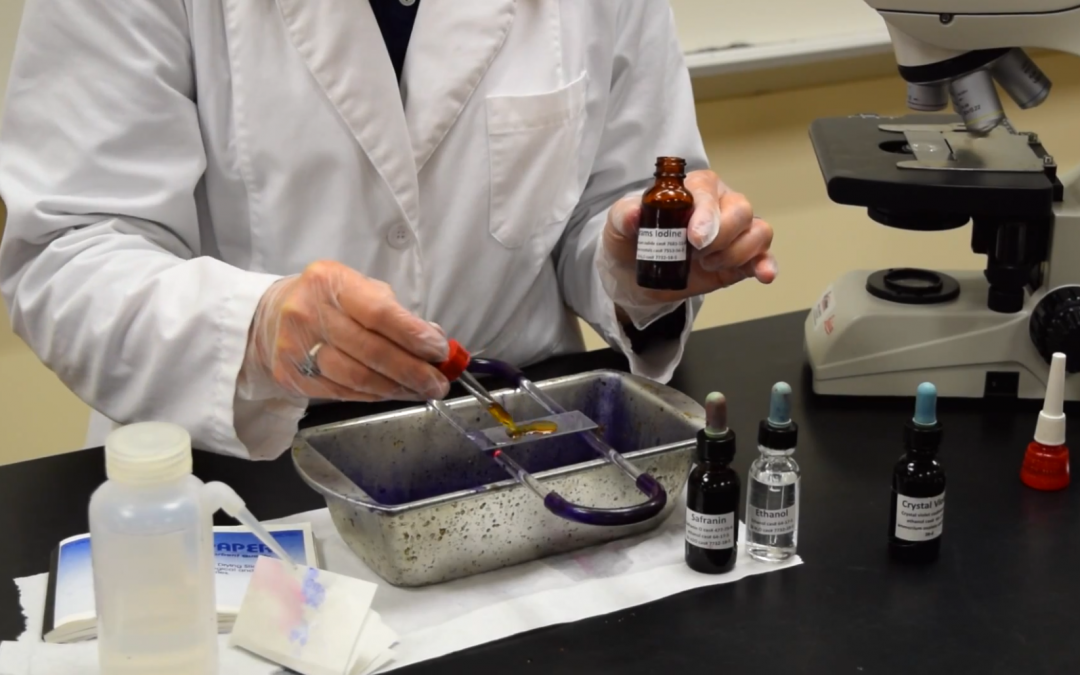 Video – MCCC Microbiology: How to Perform a Gram Stain